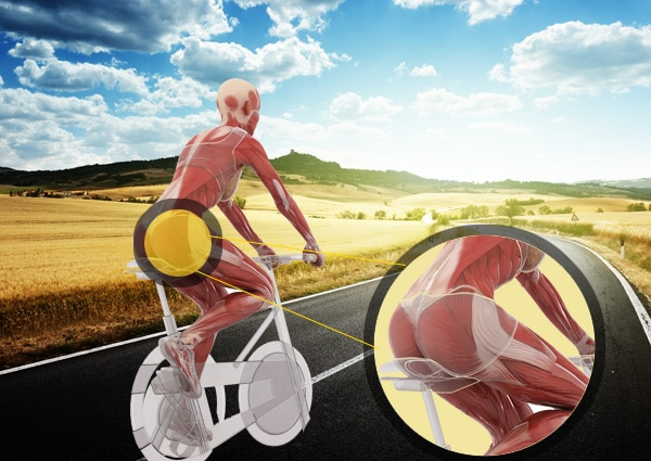Muscle Groups Targeted While Cycling - Building Muscle While